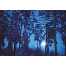 Full Moon (Magic Forest)